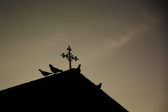 Chapel roof (Jamie B Ernstein) Tags: church chapel roof sillouette birds pigeon brazil portovelho sky