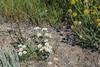 _MG_2188.jpg (nbowmanaz) Tags: saskachewan mossbank saskatchewan canada unitedstates southweststates places stvictor