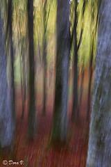 Impessions (Dora Joey) Tags: autumn trees art alberi arte dream experiment autunno impression sogno impressionismo esperimento boscodelcansiglio newvisions bestcapturesaoi