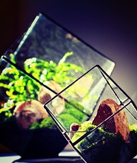 Hand made terrariums. (Ken Marten) Tags: