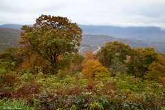 Plott Balsam Overlook Wide View - EOS_00696 (Smoky Mountain Scenics) Tags: mountains landscape nationalpark scenic northcarolina appalachian blueridgeparkway greatsmokymountains autumncolor ★excellent★ bluephoeniximages