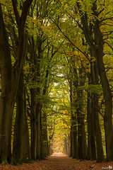 Natural Cathedral (BraCom (Bram)) Tags: autumn trees holland forest automne canon dark leaf bomen woods mood path timber branches herbst herfst pad nederland thenetherlands blad explore treetrunk bergenopzoom avenue bos autunno stam takken donker noordbrabant laan sfeer canonef24105mmf4lisusm theunforgettablepictures naturalcathedral landgoedlievensberg bracom canoneos5dmkiii natuurlijkekathedraal bramvanbroekhoven