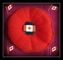 """Remembrance Day"" (ellenc995) Tags: remembranceday poppy november11 lestweforget canada topgun friends yearofholidays coth supershot citrit coth5 thesuperbmasterpiece akob challengeclubchampion thegalaxy challengeclub abigfave"