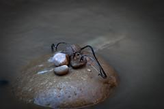 Zion National Park::Utah (:: Blende 22 ::) Tags: park usa water canon river utah nationalpark unitedstatesofamerica national amerika ef70200mmf4lisusm canoneosd canoneos5dmarkii