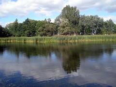 Pond and reflektion (maya_dragonfly) Tags: park sky cloud nature water landscape ilovenature pod europe poland olympus palace wildflowers wildplant rushes goldenmix mindigtopponalwaysontop autumn12 turzno wakinginature