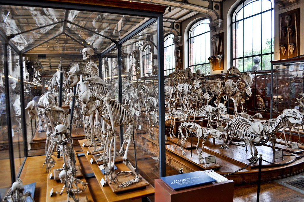 The World\'s Best Photos of anatomia and museum - Flickr Hive Mind