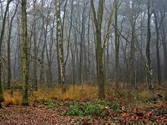 Fog in the forest (Franc Le Blanc) Tags: autumn trees nature fog forest lumix ngc panasonic drunen drunenseduinen