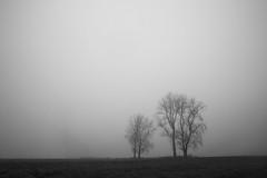 Nothing? (NJfotografie) Tags: trees white mist black tree netherlands fog landscape bomen nederland boom nothing zwart wit landschap niets