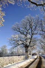 Dusting (petefreeman75) Tags: uk trees england snow allrightsreserved pellison petefreeman mygearandme mygearandmepremium