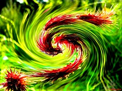 battle of the dragons (HansHolt) Tags: red vortex abstract motion flower macro green art nature speed groen kunst natuur twist twirl spinning rotation curl rood spiraal krul bloem beweging overblown draai snelheid bugleweed uitgebloeid wolfspoot lycopuseuropaeus gypsywort rotatie draaikolk mygearandme blinkagain rememberthatmomentlevel1