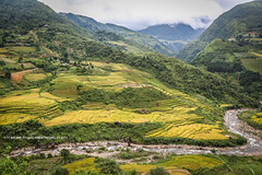 Y Ty, Bat Xat (E.D.T) Tags: road autumn mountain beautiful landscape countryside buffalo asia peace village rice harvest hanhi vietnam farmer tribe ricefield ethnic hmong laocai paddyfield ethnicminority hardworking terracedfield yty northvietnam harvestseason terracedricefield batxat pooryellow