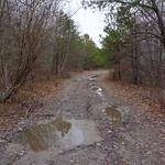 Trail through the woods thumbnail