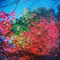 039 (yone@ta2) Tags: autumn 6x6 analog mediumformat lomography 120film filmcamera kiev60 cn100