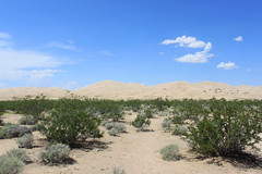 Kelso Dunes - Mojave National Preserve, California (MortAuPat) Tags: california road park trip usa nationalpark unitedstates desert roadtrip national mojave preserve ontheroad mojavenationalpreserve amerique usa2012