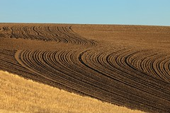 Flow (gordeau) Tags: field lines washington wheat curves gordon thumbsup simple ashby ploughed palouse unanimous flickrchallengegroup flickrchallengewinner thechallengefactory gordeau