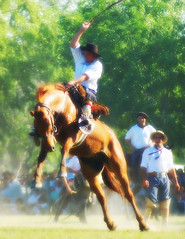 Se afirmando (Eduardo Amorim) Tags: horses horse southamerica argentina caballo cheval caballos cavalos pferde cavalli cavallo cavalo gauchos pferd pampa hest hevonen chevaux paard gaucho  amricadosul hst gacho  campero amriquedusud provinciadebuenosaires  gachos  sudamrica sanantoniodeareco suramrica amricadelsur  areco sdamerika jineteada   pampaargentina camperos americadelsud gineteada  americameridionale campeiros campeiro eduardoamorim iayayam yamaiay pampaargentino