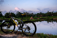 Cycling with rice fields view at Tumbu Karangasem Bali (eryarta) Tags: bicycle cycling cycle ricefieldview ricefield karangasem bali morningview morning fujifilm fujixt10