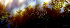 Dansons la farandole ... (clairetresse) Tags: pond reflections reflets feuillage nord isre france