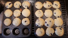 2016-08-20 09.28.58 (Paul-W) Tags: blueberrymuffins blueberry muffins muffintins minimuffins baked