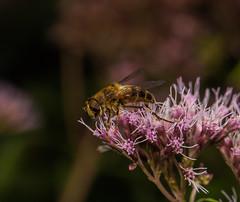 Welt der Insekten (alexanderrck) Tags: macro canon insekten sommer natur