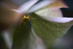 Shady (Strange Artifact) Tags: sony a7r kiron 105mm 128 macro levenstuinengroothontschoten