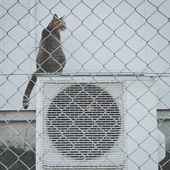 photo (shoji.k) Tags: cat snapshot fence eyembestshots animals favorite streetphotography animalthemes relaxing iphoneography mobilephotography