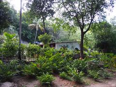 Finca Carpe Diem (little_duckie) Tags: minca bonda colombia southamerica finca cacao waterfall cascada jungle