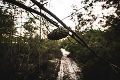 _DSC9464 (CassinStacy) Tags: forest florida woodlands night dusk sky clarity spooky dark scary evening radio tower