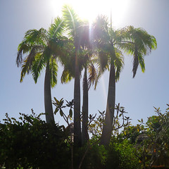 Au revoir. (HausOf_Diegoo) Tags: palm palmtree palmera palmeras palmtrees landscape paisaje paisajesdevenezuela venezuela vzla venezuelanphotographer gallegosenelmundo higuerote aguasal clubaguasal sony sonydscw610 dscw610 dsc sun sunny sunshine lights light highlight sky cielo sol soleado rayodeluz rayodesol playa beach agosto august
