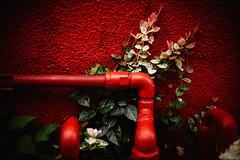 red (gol-G) Tags: sony a7 ilce7 alpha7 nokton 35mm f12 vmadapter voigtlandernokton35mmf12aspherical digital color japan tokyo