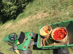 2016 Harvest (Craig Williams1970) Tags: reapwhatyousow growyourown homegarden gardenfresh homestead farmlife homegrown johndeere peppers tomato yum crop harvest farm tractor garden
