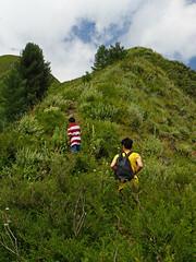 Miranjani: In lush greenery (Shahid Durrani) Tags: miranjani nathiagali hike