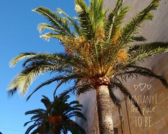 Greetings from Santany - the place to be  (DoSchu) Tags: palmen santany instagram rayaworx mallorca