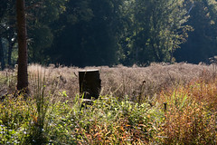 ckuchem-8312 (christine_kuchem) Tags: abholzung baum baumstumpf baumstmme bume einschlag fichten holzeinschlag holzwirtschaft kahlschag lichtung stumpf wald waldwirtschaft kahl