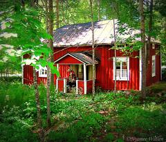 Scandinavian summer house. (nyomee wallen) Tags: scandinaviansummerhouse redhouse inthenorth lonelylady alonewomaninthehouse myfirstdigital
