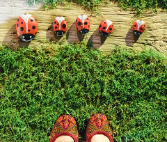 From where I stand (natashaj13) Tags: ladybugs ladybird red pebbles khussa nature outdoor