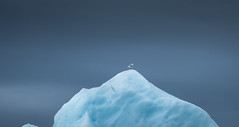 Outlook (Frank Busch) Tags: frankbuschphotography imagebyfrankbusch photobyfrankbusch glacier greenland ice kayaking ocean seagull southgreenland wwwfrankbuschname