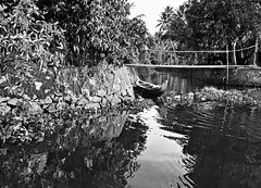 Among the Water Flowers (The Spirit of the World) Tags: canal water waterscape bw waterflowers reflections waterreflections kerala backwaters india southernindia palms foliage tropical