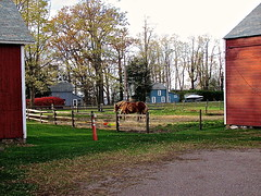Starr Farm – two horses (origamidon) Tags: horses usa burlington vermont vt parksandrecreation greenmountainstate starrfarm chittendencounty 05408 origamidon donshall burlingtonvermontusa splitrailfencing starrfarmcommunitygarden starrfarmroad