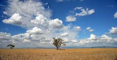Three Trees Panorama (paulhollins) Tags: australia newsouthwales aus nikond600 breeza