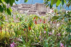Machu Picchu-103