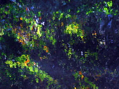reflections rippled water (Quetzalcoatl002) Tags: water reflections rippled marlot