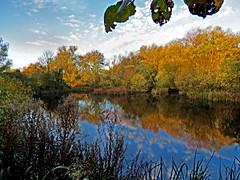 From The Kramer Hide (Rob Felton) Tags: autumn sky reflection water leaves bedford bedfordshire hide felton reds countrypark priorycountrypark robertfelton fingerslake kramerhide