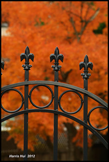 Can You Fence Off Fall Colour? 攔不住的秋色 - No 2 Road 8822e