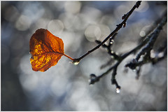 20121028. The leaf. 5867. 1. (Tiina Gill (busy)) Tags: autumn winter fall nature leaf estonia ngc supershot flickrdiamond sailsevenseas