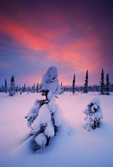Novembers Snow (Wolfhorn) Tags: winter sunset snow cold alaskalandscape naturewilderness