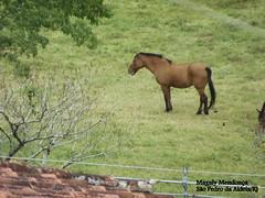 cavalo (Magaly Mendona) Tags: cavalo sabadoanimal