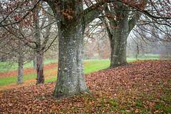 20121119-_DSC0566.jpg Kingston Lacy (ClifB) Tags: november autumn tree landscape dorset nationaltrust 2012 kingstonlacy