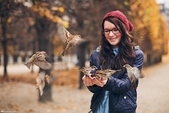 My Parisian Sparrow (Rick Nunn) Tags: autumn trees wild portrait people paris nature girl hat birds animals female hair fly wings holding hand feeding flight photojournalism knit rick highlights bn jacket sparrow biscuits sparrows nunn preparations hover spadge canonef50mmf14usm