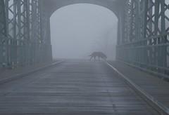 vargen (Scilla sinensis) Tags: bridge autumn dog mist fog grey crossing nebel gray fiftyshadesofgrey sichtweiteteilweiseunterfünfzigmeter